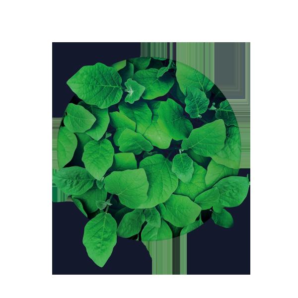 Grafika: punkt (motyw liści)