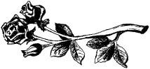 czarnobiały rysunek róży