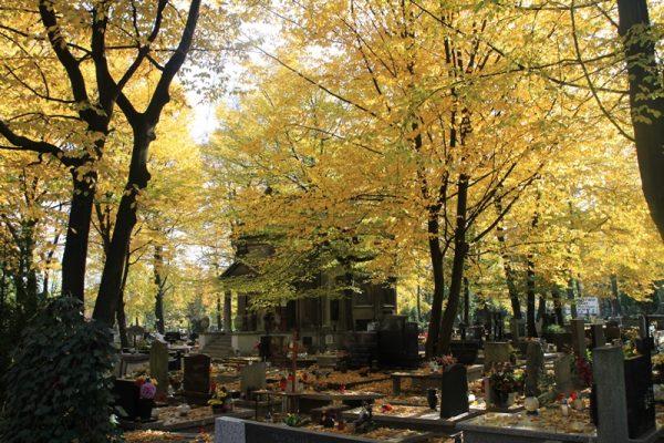 cmentarz przy ul. Francuskiej w Katowicach