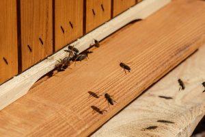 Ul i pszczoły, zbliżenie na wylotek