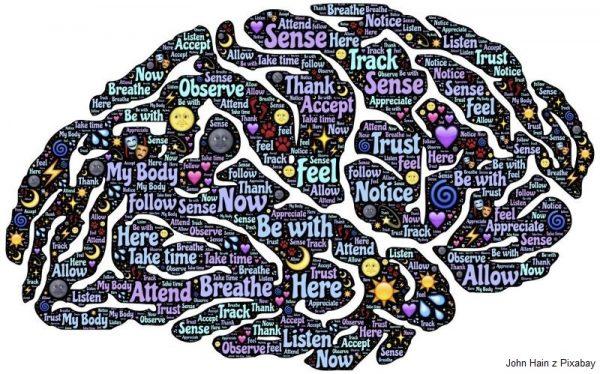 grafika mózg