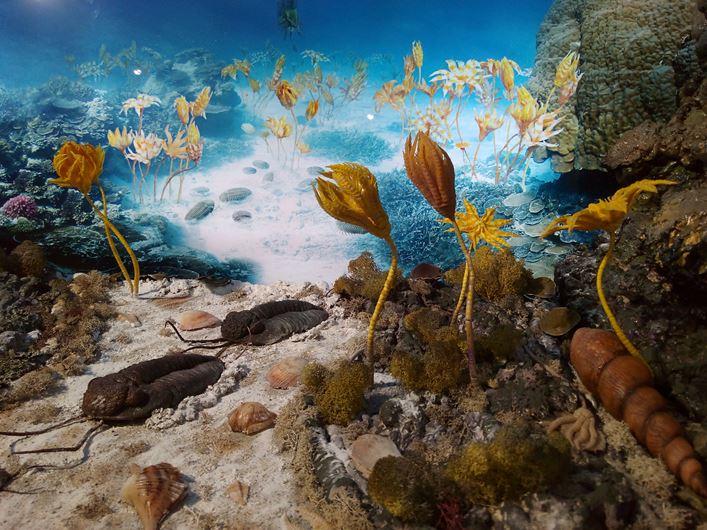Dewońska rafa koralowa, fragment wystawy Muzeum Wydziału Nauk o Ziemi