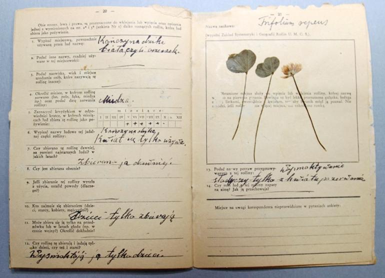 Przykładowa ankieta przypominająca zeszyt, zawierająca podstawowe informacje dotyczące rośliny oraz zasuszoną roślinę