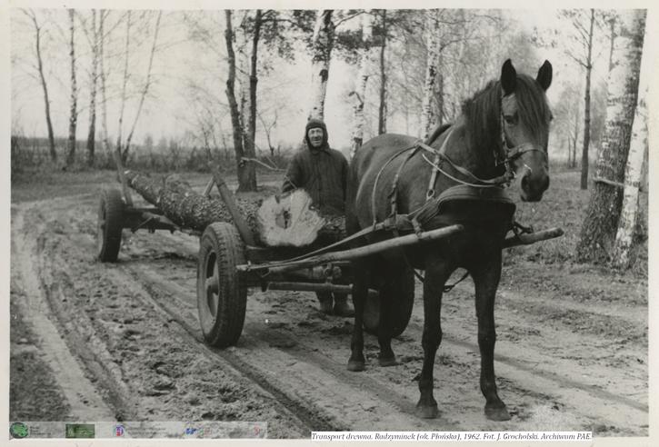 Zwózka drewna, mężczyzna wiezie drewno na wozie ciągniętym przez konia