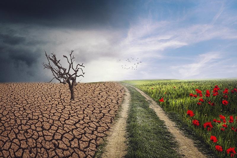 """[ONLINE] Konferencja naukowa pt. """"Edukacyjne projekty działań proekologicznych"""""""