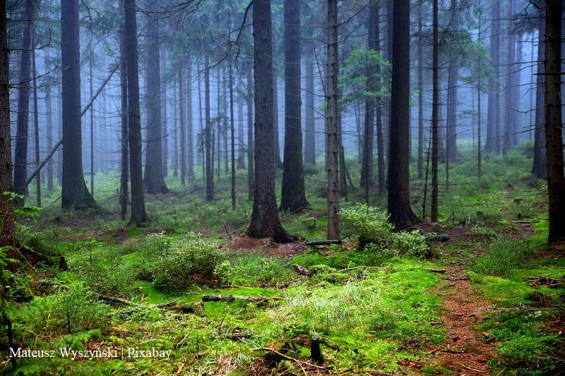 Drzewa w lesie/trees in a forest