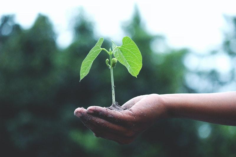 roślina trzymana w dłoni
